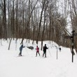 Cross-country skiing on Mont Royal. (Lesly Yao / McGill Tribune)