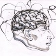 The brain is perhaps the most complex organ in the human body. (Elli Slavitch / McGill Tribune)